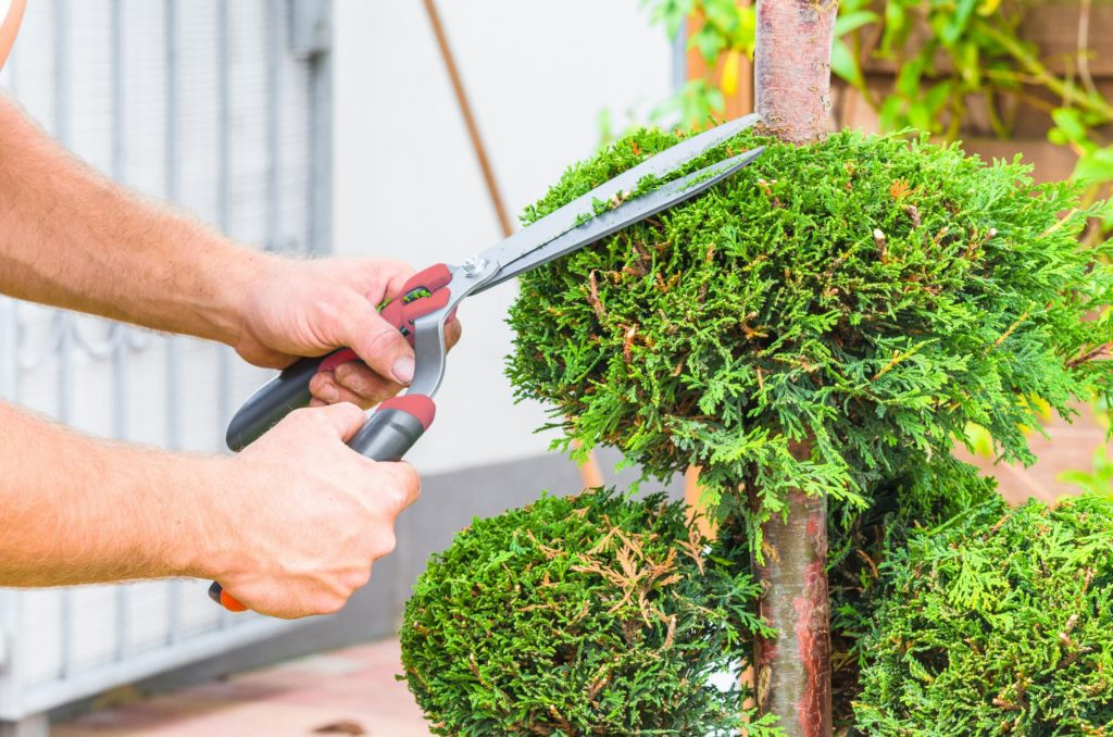 Burlington Tree Care Pros - Tree Trimming Service 2