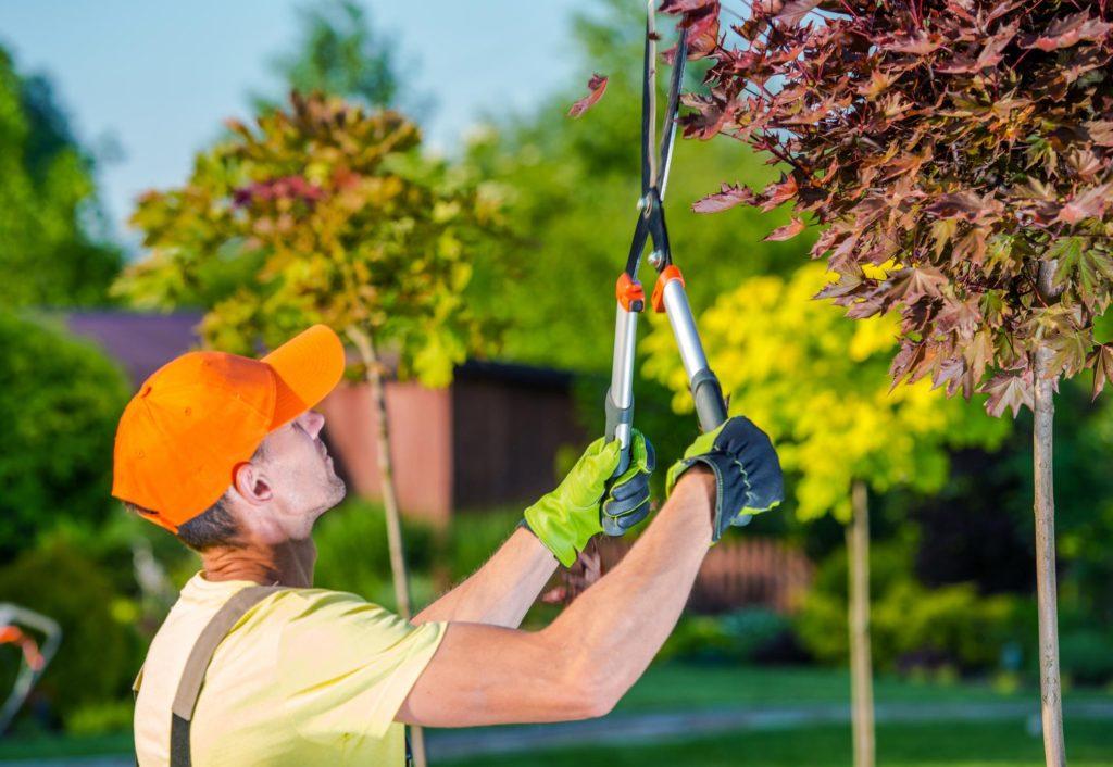 Dothan Tree Professionals - Tree Trimming 2