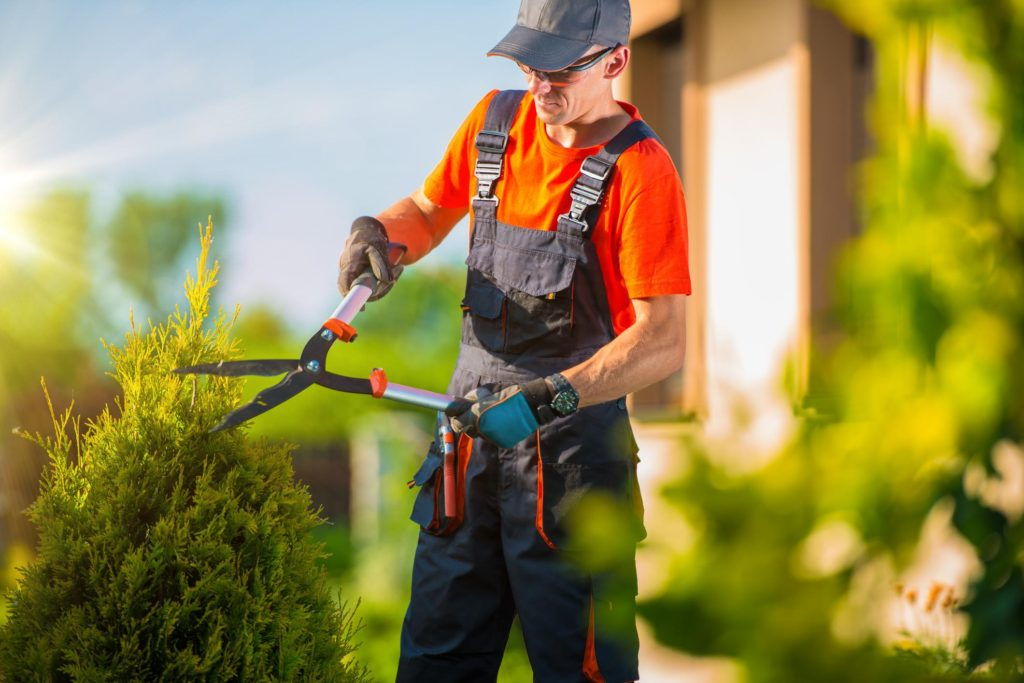 Gainesville Tree Service - Tree Trimming 2