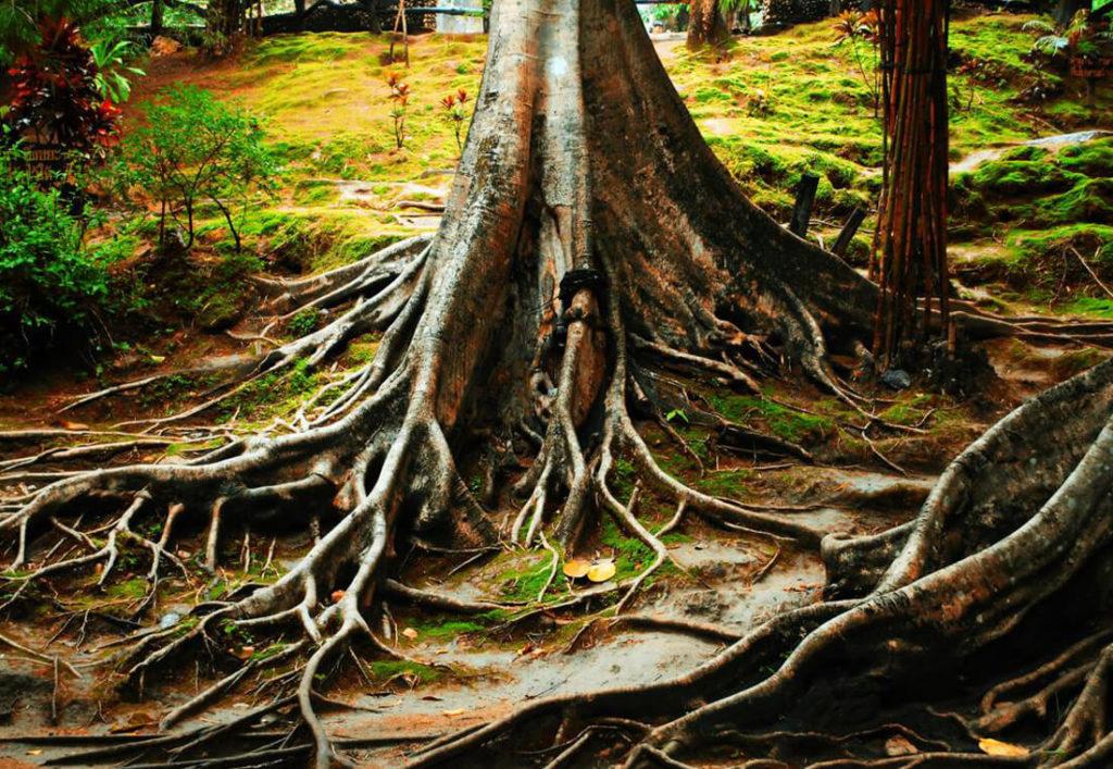 grapevine-tree-service-deep-root-fertilization-1_orig