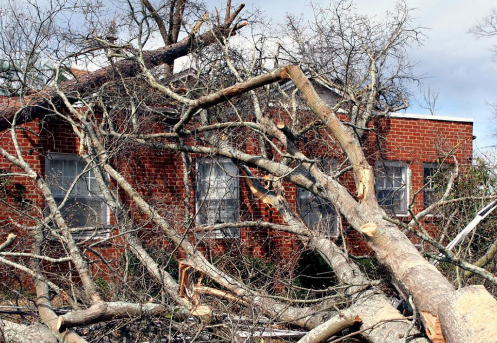 grapevine-tree-service-storm-damage-cleanup-2_orig